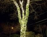 Holiday Lighting on Whiting Rd. in Wellesley, MA